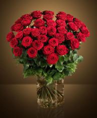 Rose Rosse XXL online