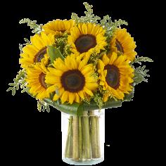 Sunflower online