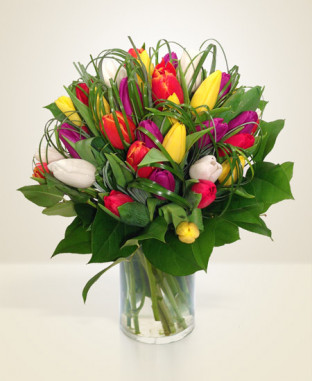 Tulipani mix online