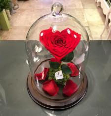 Campana con rosa stabilizzata a cuore online