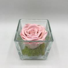 Rosa stabilizzata in cubo...