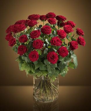 Rose Rosse XL online